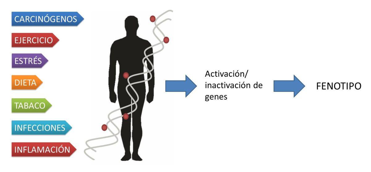 Epigenética-y-ambiente